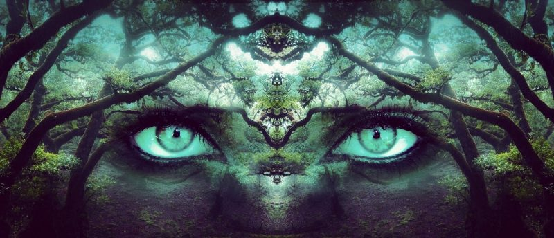 Beautiful woman's eyes in the forest